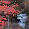 Photos: 鮮やかな紅葉と川の流れ