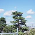 SIGMA30mm f2.8試し撮り いつもの景色 秋空と雲と木