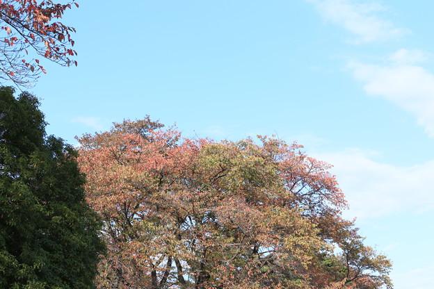 秋空と紅葉~稲荷山公園
