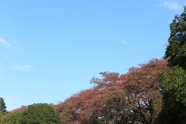 紅葉と秋の空~稲荷山公園