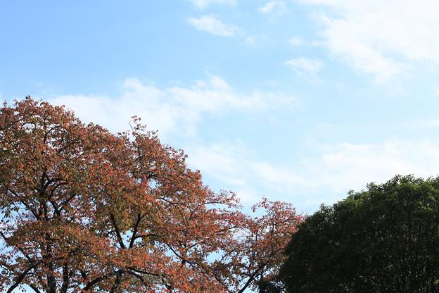快晴の空と稲荷山公園の木々