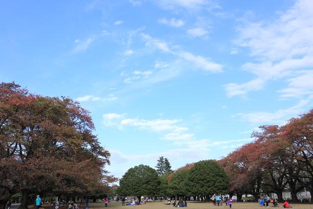 秋の稲荷山公園~入間基地航空祭2014
