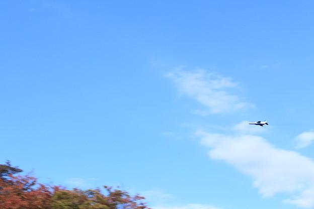 秋空を横切るブルーインパルス