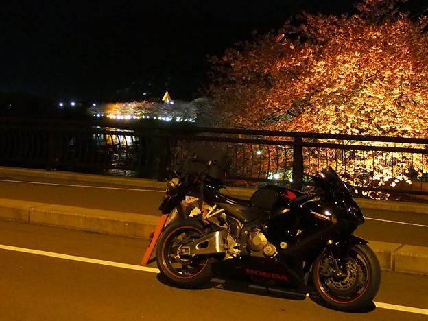 河津桜のライトアップと愛車~2015.2.27
