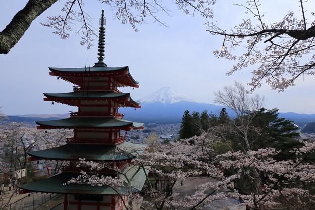 桜と富士山と五重の塔~新倉浅間山公園~