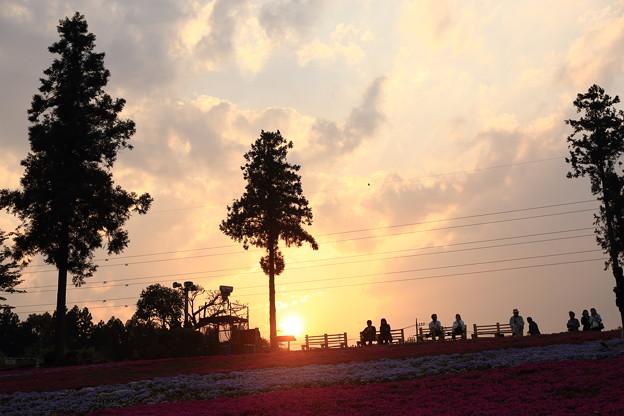 芝桜の丘の夕景