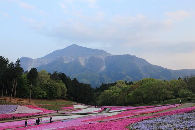 芝桜の丘~羊山公園