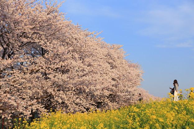 春の三色♪