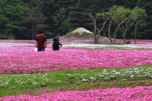 富士芝桜会場のミニ富士