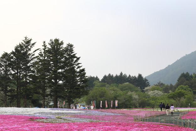 富士芝桜のパッチワーク