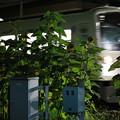 青梅街道駅のひまわりと電車~夜~