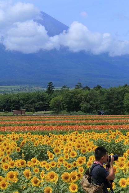 富士山とひまわり畑とカメラマンさん