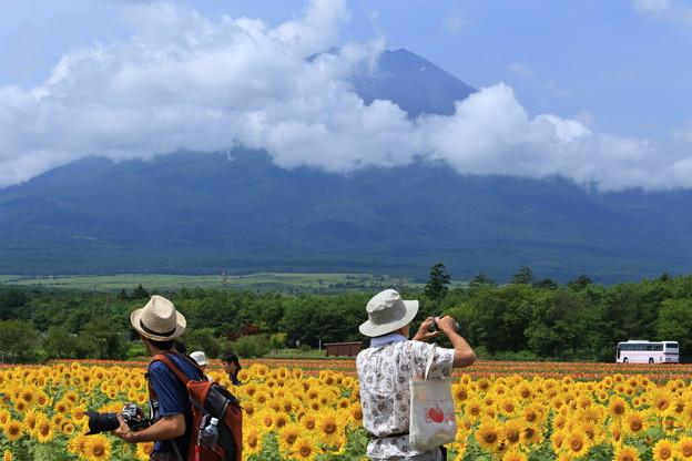 ひまわり畑と富士山とカメラマンさん