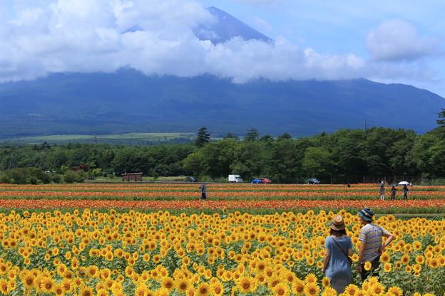 ひまわり畑から富士山を望むふたり