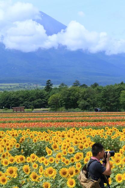 「富士山とひまわり畑とカメラマンさん」