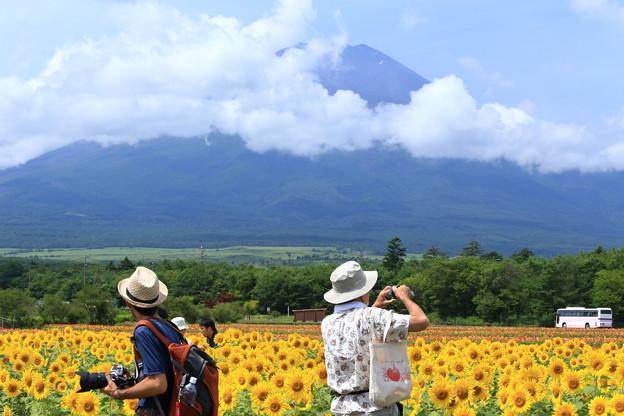 「ひまわり畑と富士山とカメラマンさん」