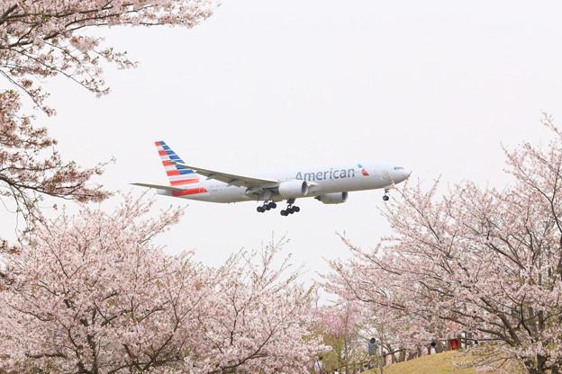 アメリカン航空と桜