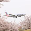 Photos: アメリカン航空と桜