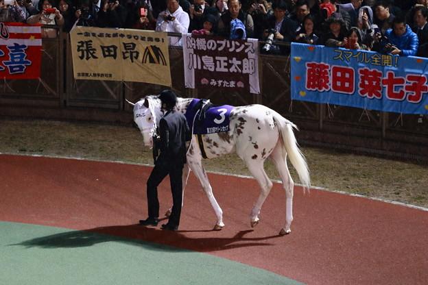 白馬のサラブレッド~ぶちこ号~