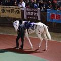 Photos: 白馬のサラブレッド~ぶちこ号~