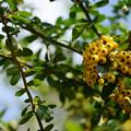 Photos: 秋の植物5