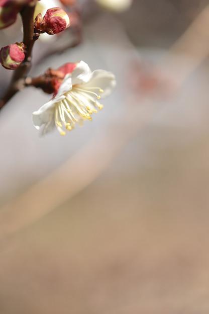 Photos: 春の薫り