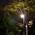 Photos: 夕暮れ公園