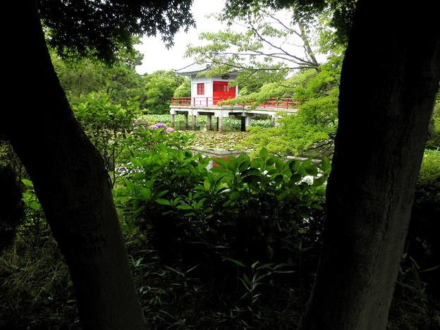 烏山寺町-04高源院・弁天池(烏山鴨池)_せたがや百景