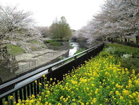 祖師谷公園-04せきれい橋から鞍橋_親水テラス