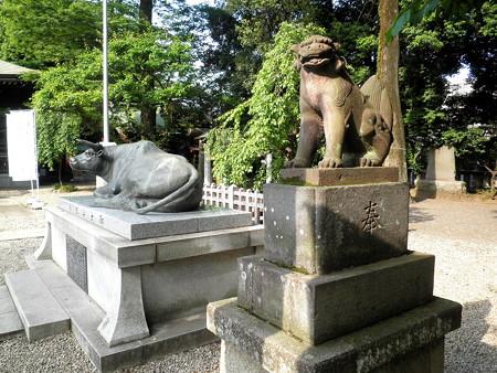 布多天神社-05a狛犬と御神牛