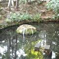 Photos: 泉龍禅寺(狛江)_弁財天-02弁財天池b