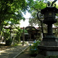 Photos: 泉龍禅寺(狛江)-06本堂b-1紫陽花