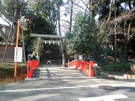 駒繋神社-01神橋&鳥居・鳥居左_赤四手(アカシデ)の木