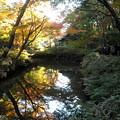 写真: 六義園-紅葉10山陰橋から