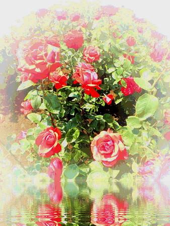 薔薇の言葉a-02
