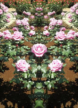 薔薇の言葉d-01