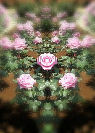 薔薇の言葉d-02