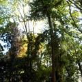 晩秋-05外国産針葉樹見本林b