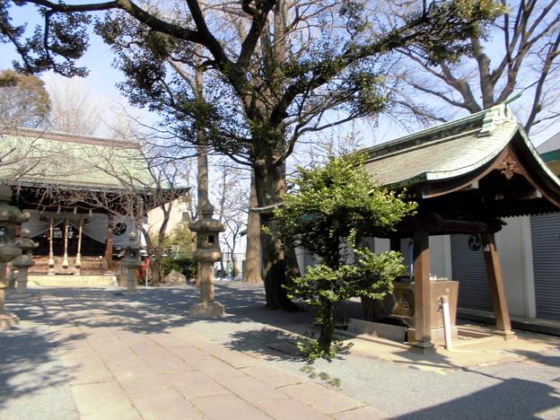 都電荒川線_王子駅前駅界隈:飛鳥山周辺_七所神社-03拝殿・手水舎