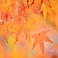 Photos: 橙椛s