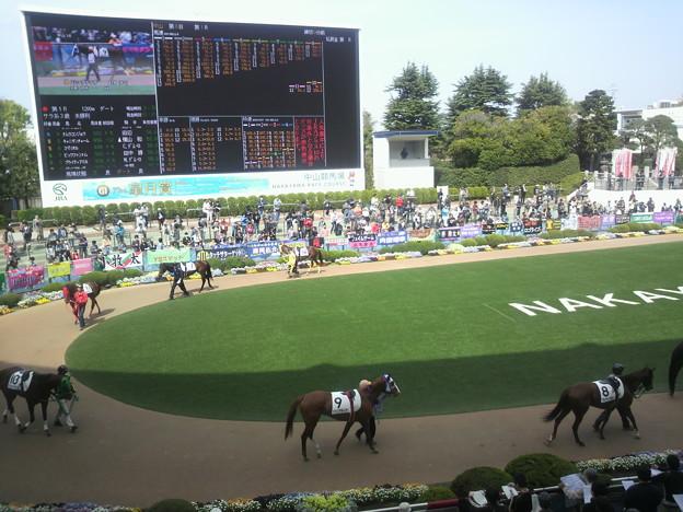 Photos: 中山競馬場パドック。1R出走馬が周回中。 #towanouma