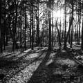 木洩れ日燦々