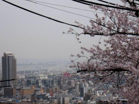 桜のトンネル2013