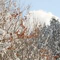 Photos: IMG_7289 おまけ・コースからの風景