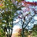 Photos: 高取城跡紅葉06