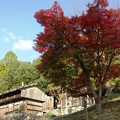 Photos: 大和民族公園紅葉11
