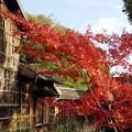 Photos: 大和民族公園紅葉10