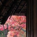 Photos: 大和民族公園紅葉02