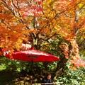 Photos: 談山神社紅葉13