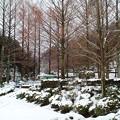 Photos: 雪景色07
